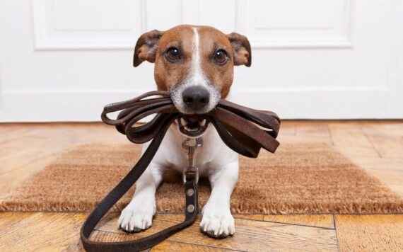 Training your puppy to leash
