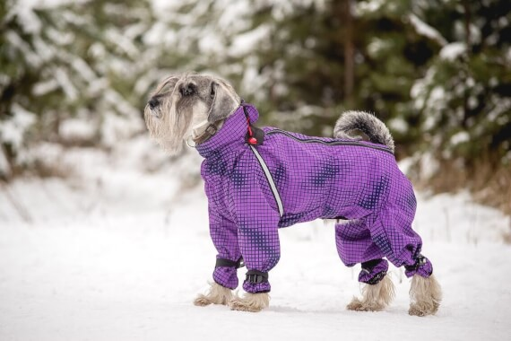 Winter dog clothes