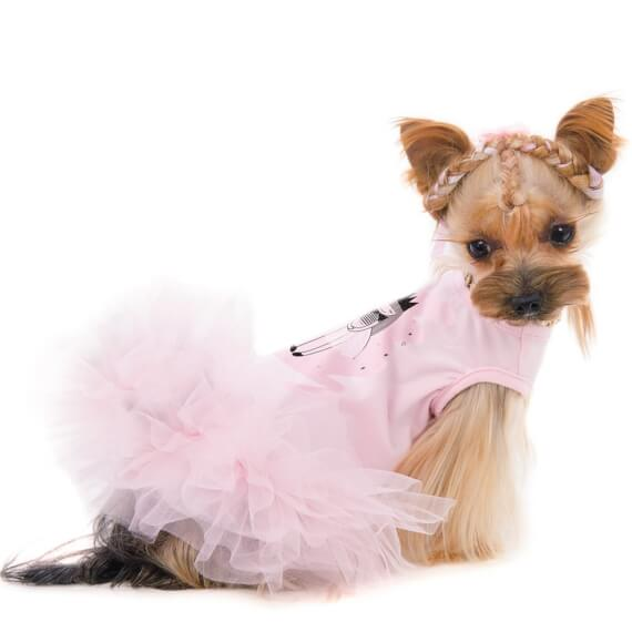 Clothing for dogs of small breeds