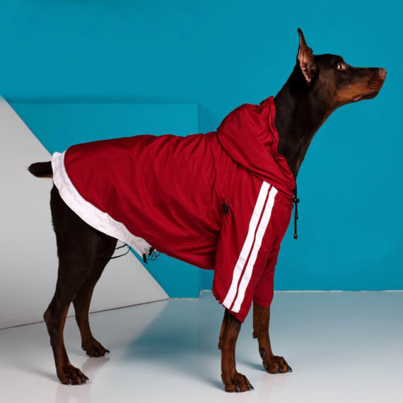 Clothing for dogs for fall and winter