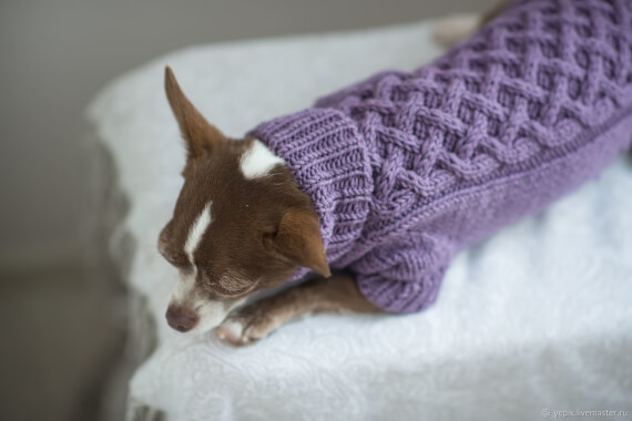 Sweater for the dog
