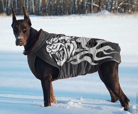 Clothing for large dogs,