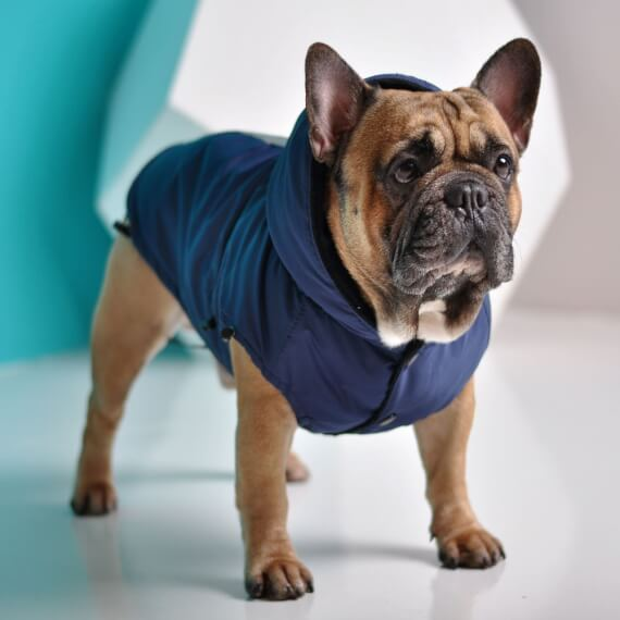 Clothing for small dogs